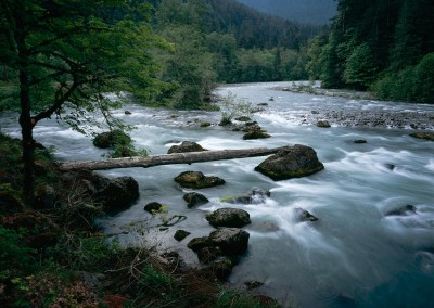 Elwha-River-log-Scott-Church-copy